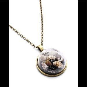 Jewelry - Seashell  Necklace  Capsule / (OS) NWT!!